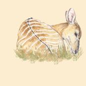 Nyala Antelope for Pillow