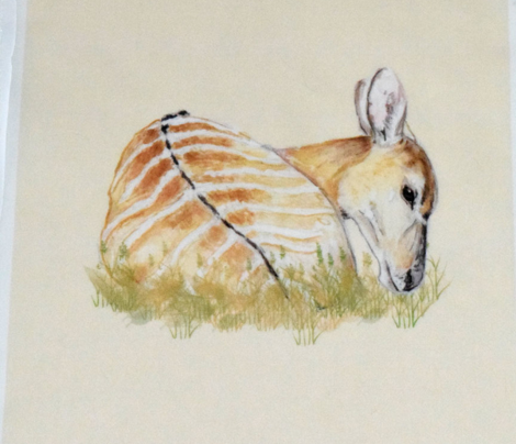 Nyala Antelope for Pillow
