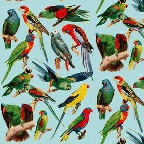 Parrots on blue