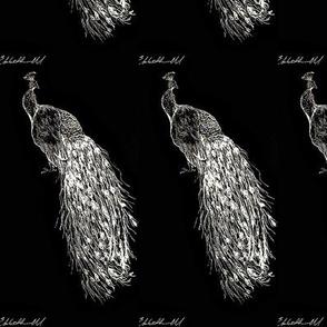 White Peacock by Liz H Lovell