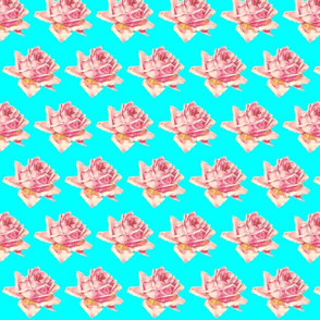 Single Rose Pink on Aqua