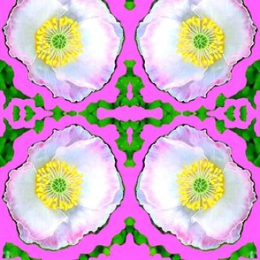 Mara's Poppies