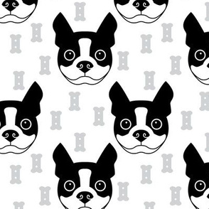 boston-terrier-and-dog-biscuits