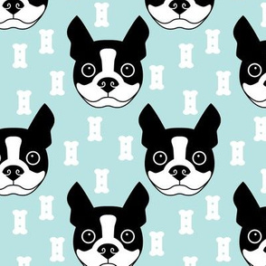 boston-terrier-and-dog-biscuits-on-blue-background