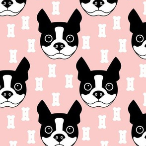 boston-terrier-and-dog-biscuits-on-pink-background