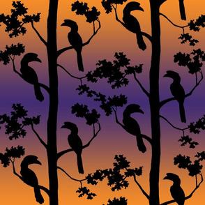 Twilight hornbills
