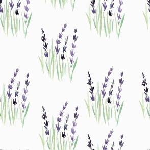 lavendar flowers
