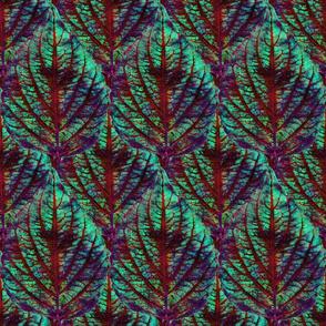 Coleus Leaf 4