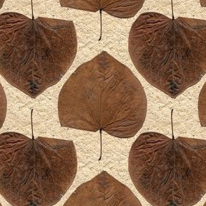 One Leaf, Two Sides in Free Fall