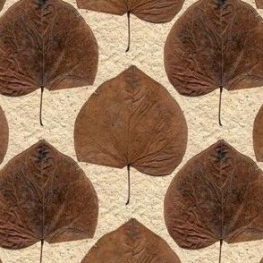 One Leaf, Two Sides