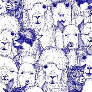 just alpacas blue white