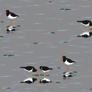 collective: parcel of oystercatchers 1