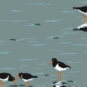collective: parcel of oystercatchers 2