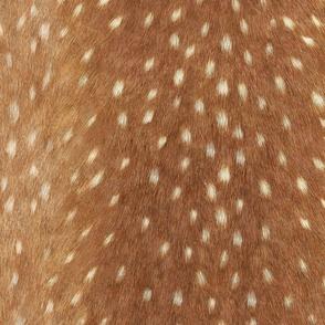 Soft Deer Hide // Spring Fawn