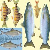 Fish shaped pillows - perch, salmon, bass, whitefish, trout, sunfish, sturgeon, steelhead, walleye, pickerel, smelt
