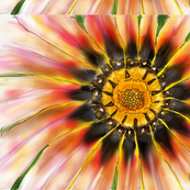 Wildflower by Kschowe