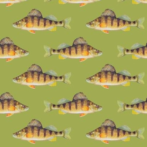 Yellow perch on golden green