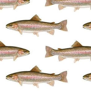 rainbow trout on white