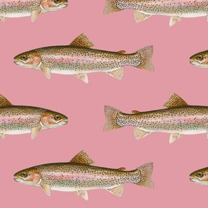 rainbow trout on rosebud pink
