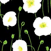 Poppies - Black