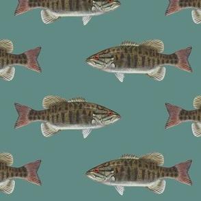 smallmouth bass on slate blue