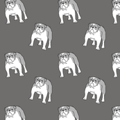 Bulldog gray