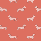 dachshund_coral