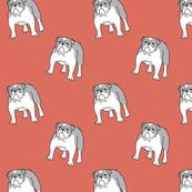 bulldogg_coral