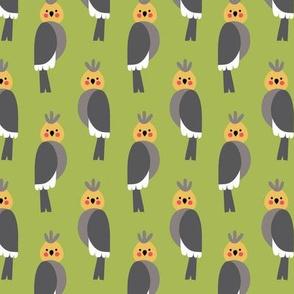 Cockatiels in green