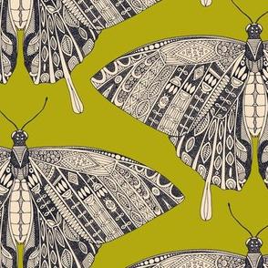 swallowtail butterfly citron basalt