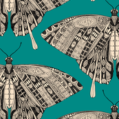 swallowtail butterfly teal black
