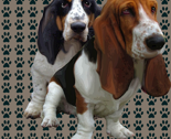 Rbasset_fabric_design_thumb
