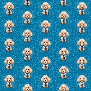 Miniature Poodle Teddy Blue S