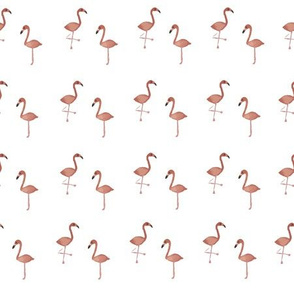 tiny flamingos