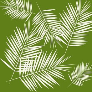 Palm leaves - white on grass green tropical Palm tree || by sunny afternoon