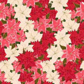Poinsettias Overall