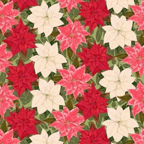 Red White and Pink Poinsettia on fuzzy leaves