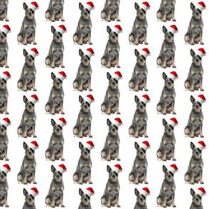 Santa Cattle Dog