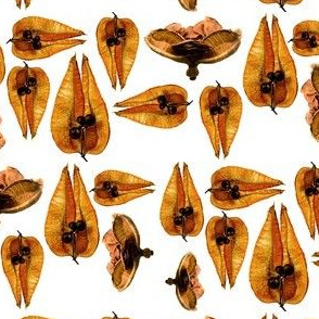 Seed Pods Large