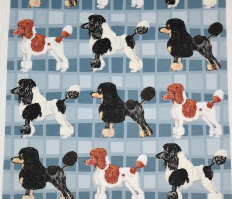 Fancy Poodles on Parade