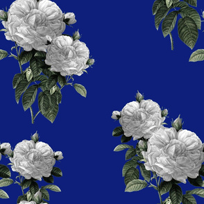 Redoute' Roses ~ Riot of  White Blooms on Bandy Blue