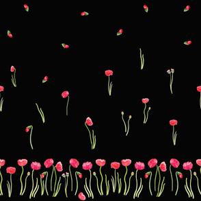 Poppy on black
