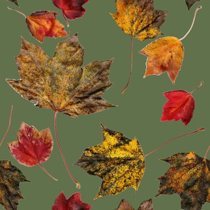 Autumn Leaves on Green