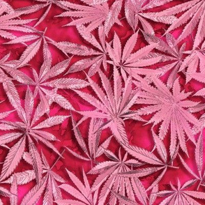 Passion Pink Cannabis