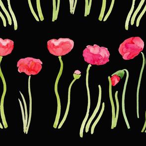 watercolor poppy flowers on black
