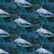 shark-1690702_960_720_2