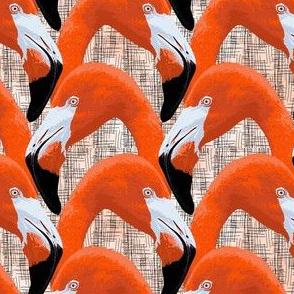 flamingo_heads