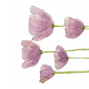 Lavender Poppies 2