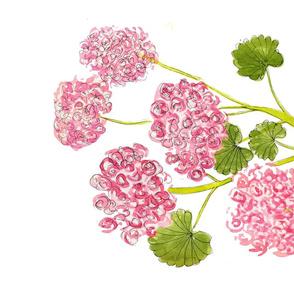 Pink Geraniums 2