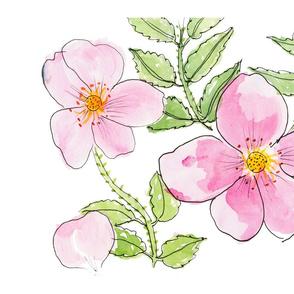 Wild Rose, Rosa Rugosa